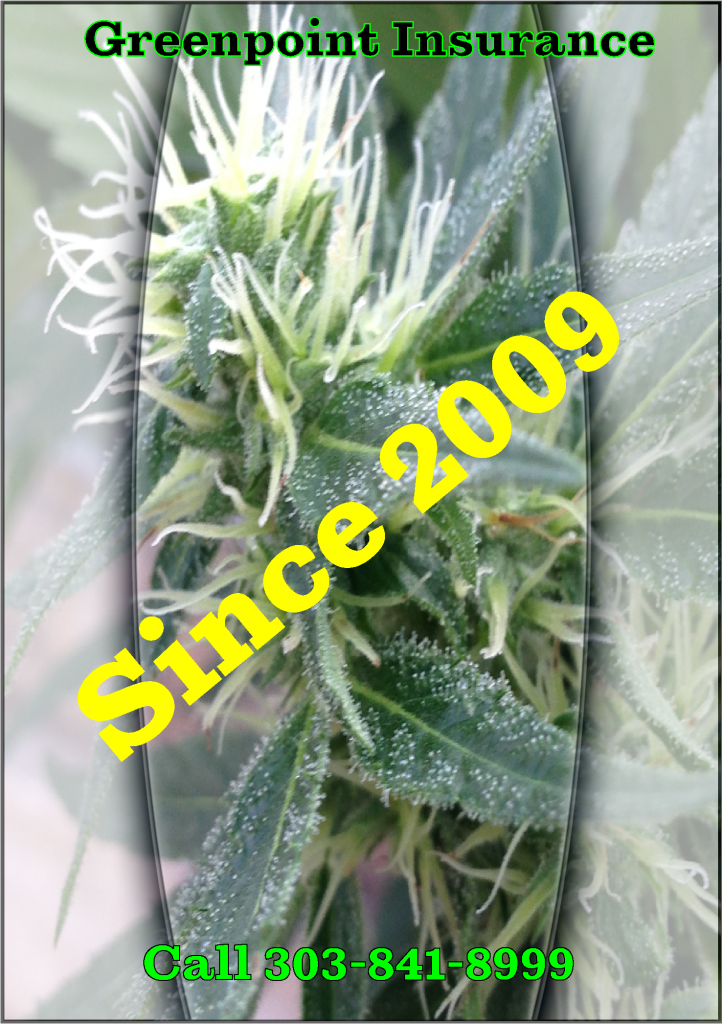 Cannabis Plant Offering Insurance Since 2009